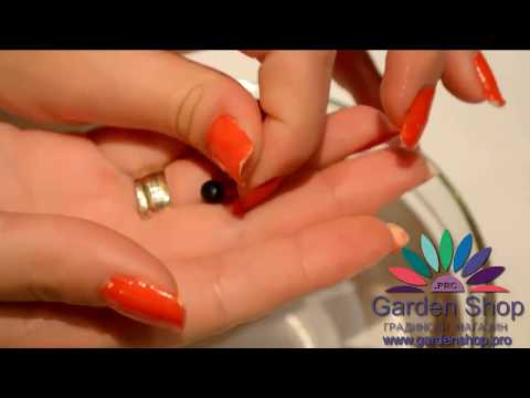Как выращивать цветок стрелиция (райская птица) размножение из семян видео