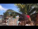 Wild Hippy - IV Куба:Круиз (17-18)