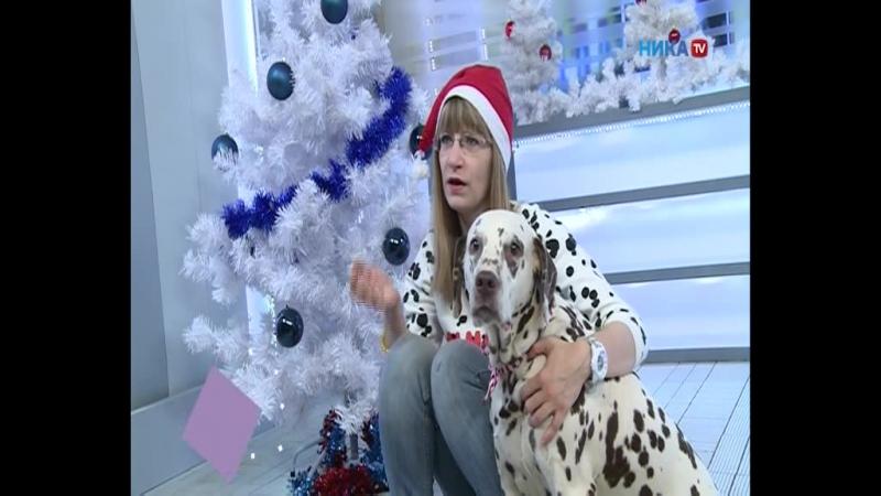 Собаки телекомпании Ника тв