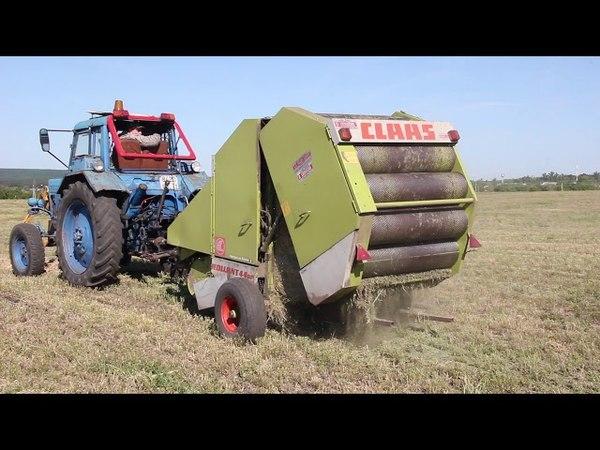 Новооскольские аграрии приступили к заготовке кормов для крупного рогатого скота