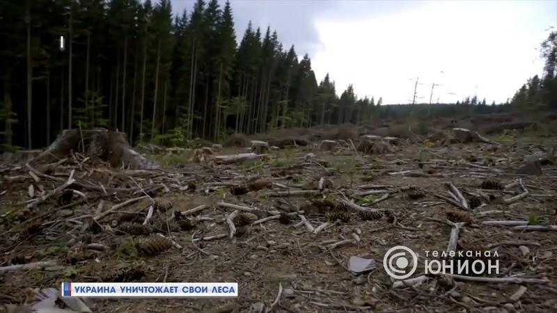 Украина уничтожает свой лес. 19.07.2018, Панорама