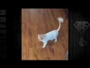 Смешные Танцующие Коты Кошки ДО СЛЁЗ Приколы с котами Cats Dancing
