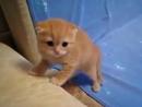 Котёнок шипит хорошее настроение, животное, милое видео, котейко, кот, кошка, семья, ребенок, страх, няшный, кавайный домашнее