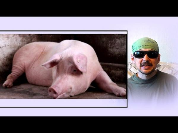 Свиньи-Бюрократы(Коррупция)