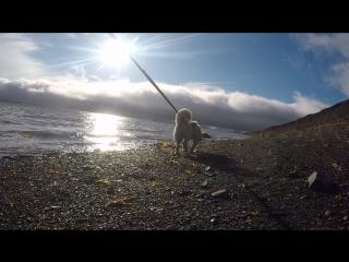 Прогулка с Белкой по берегу
