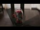 Потрясающая роза в колбе от Rose in flask