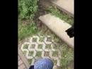 у котика все норм