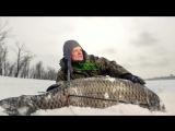 Fish Hungry Зимний активатор клева ВСЕГО за 99 рублей!?