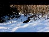 Субботняя прогулка в лесу. За вдохновением! VLOG #1