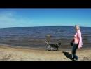 Вывез девчонок на море, море правда Балтийское