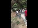 Драка в центральном сквере Фороса 18 июля 2018 года