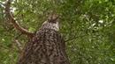 Общественники предложили заменить тополя в городах другими деревьями (Бийское телевидение)