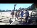 Жирафики и Нюшка