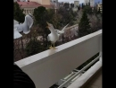 Сочинские попрошайки на балконе Гранд Отеля Жемчужина