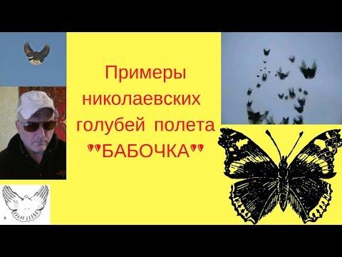 Николаевские голуби полет БАБОЧКИ