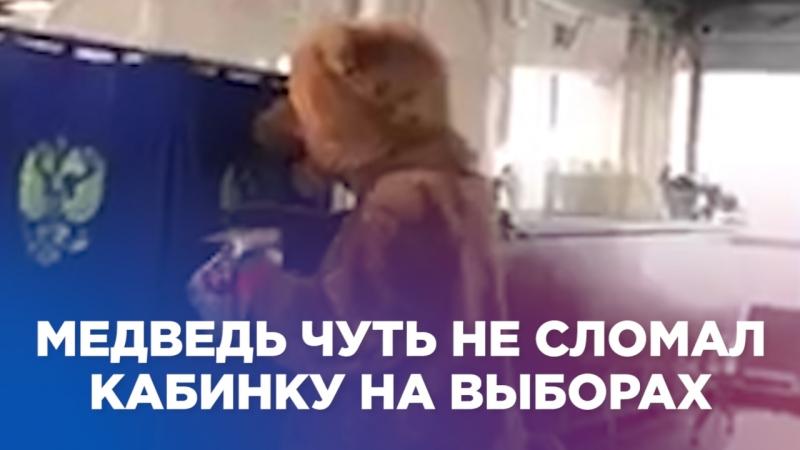 Медведь чуть не сломал кабинку на выборах