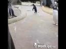 Танцующий пингвин.mp4