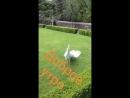 Video a615cbb9db86dfaaea5727d1ade44afd