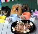 Какой же праздник без вкусняшек от Monge! А вы отмечаете день рождения вашей собаки?
