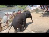 Как же я люблю слонов! Потрясающие животные.