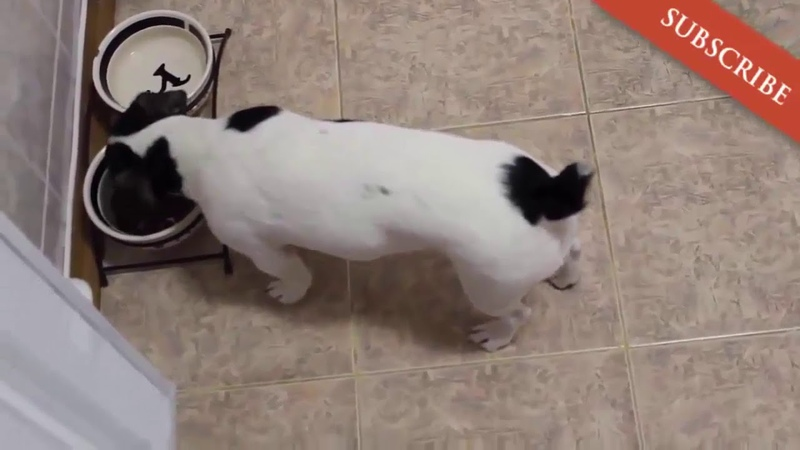 Lustige hunde videos zum totlachen. Süße hunde filme 4