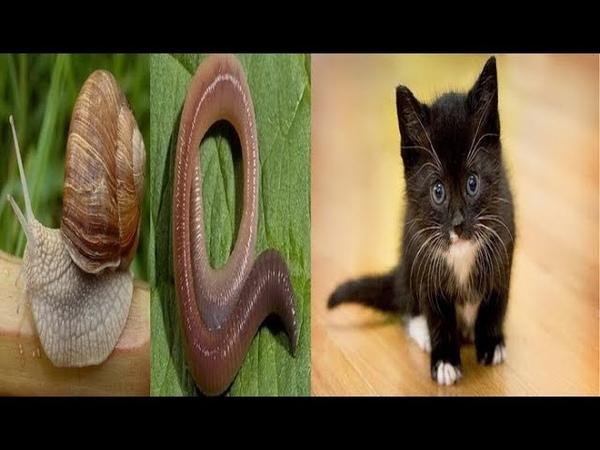 Что Где Когда Вопрос об улитке, черве и котенке
