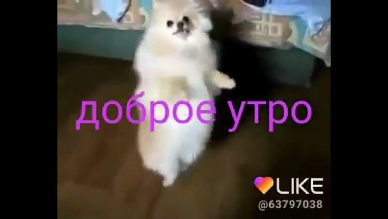 Доброе утро Собака танцует танец 360P mp4