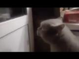 Открой дверь (кот Яша)