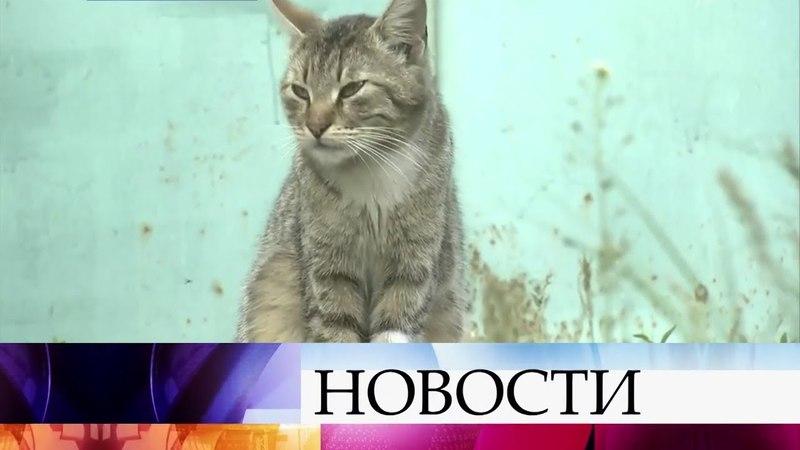 В Воронежской области люди и животные страдают от небывалого нашествия комаров.