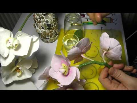 Орхидея Фаленопсис. Мастер Класс от Риты. Часть 5.Завершение