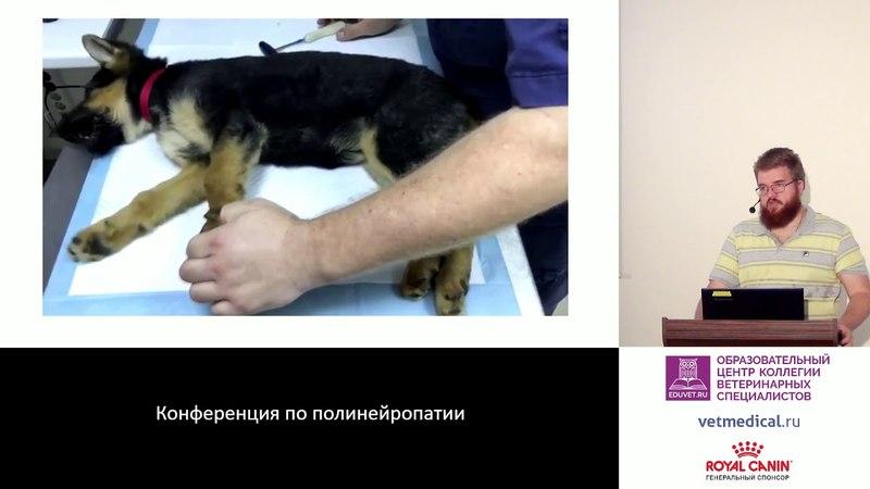 Копытов К Г Острый полирадикулоневрит собак