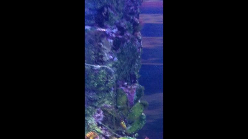 рыба-клоун океанариум «нептун»