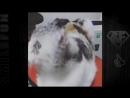 Приколы с Котами ДО СЛЁЗ Смешные коты и кошки 2017 _ смешное видео про котов DownloadfromYOUTUBE.top