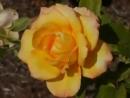 нежная песня поздравления с днем рождения и много роз