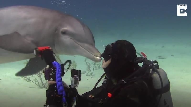 Все любят целоваться