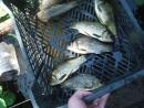 Меха на домашней рыбалке 4 Ловись рыбка
