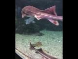 Самый большой океанариум в России Sochi Discovery World Aquarium