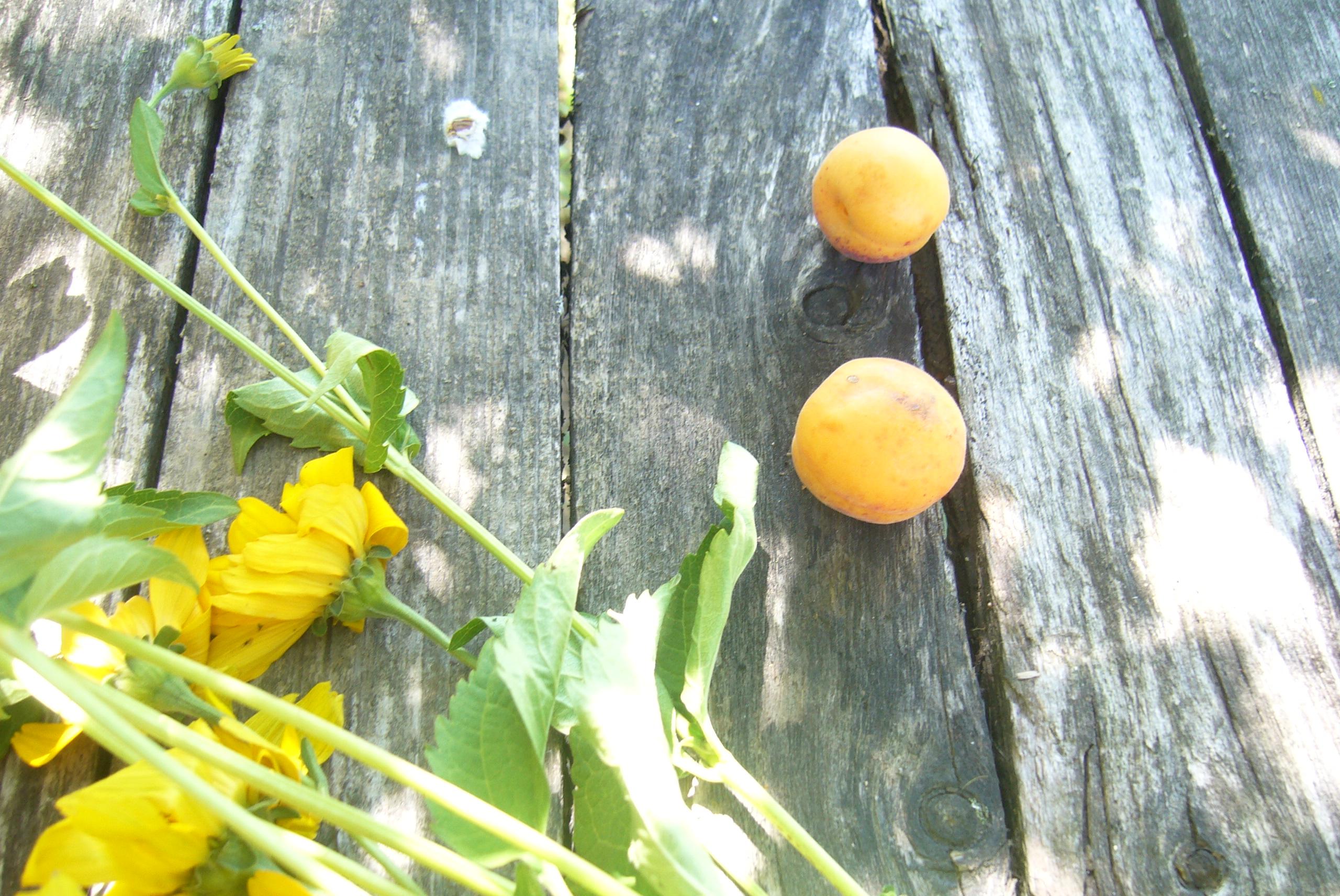 Белорусские абрикосы, какие они?