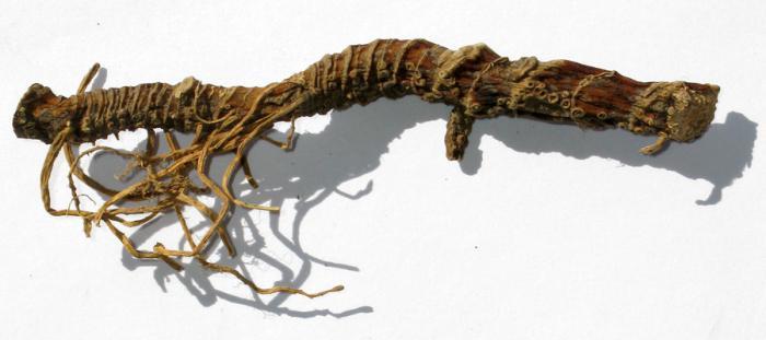 лечение корнем аира