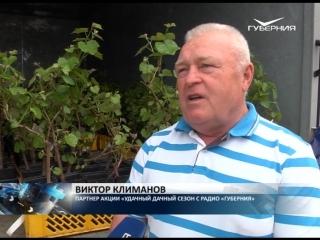 «ТРК ГУБЕРНИЯ» раздала 500 саженцев винограда