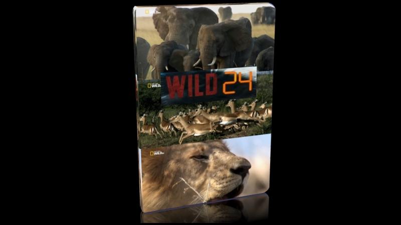 Дикие животные 24 часа / Австралия. после муссона / 2016 / Full HD