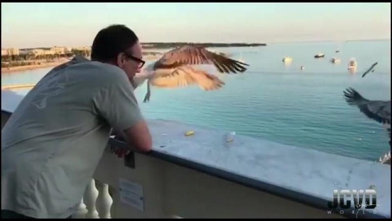 Ван Дамм и его друзья чайки.
