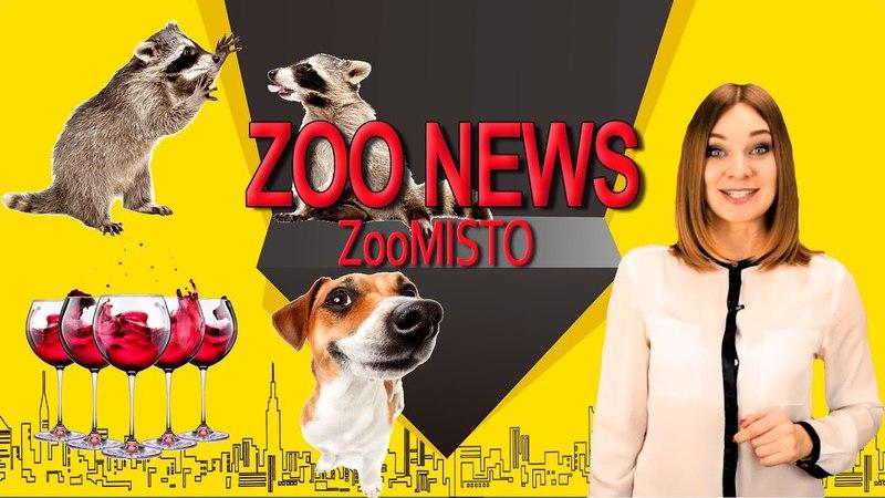 Расслабляющие напитки для собак и зомби апокалипсис   Новости из мира животных 4   ZooMisto