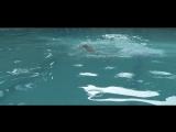 Ale Mendoza - Rogando Amor (Videoclip Oficial)