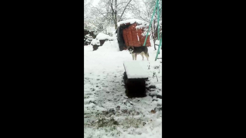 мікі і перший сніг