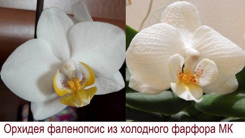Орхидея фаленопсис из холодного фарфора и полимерной глины Мастер класс