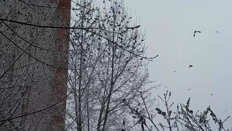 Нашествие дроздов