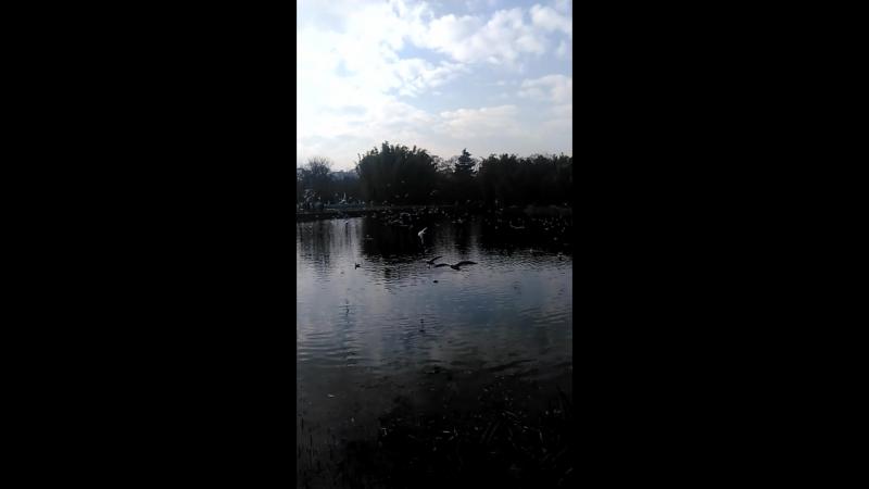 парк в Куньмине