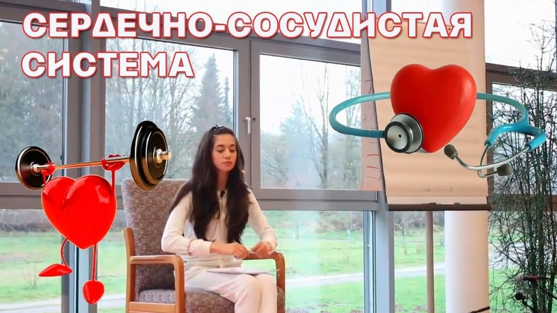 Сердечно сосудистая система. Элина Матвеева.