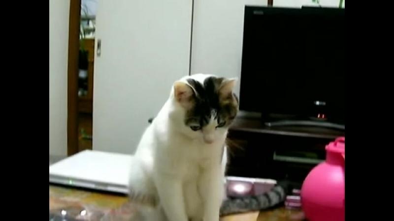 Sooooo cute cat